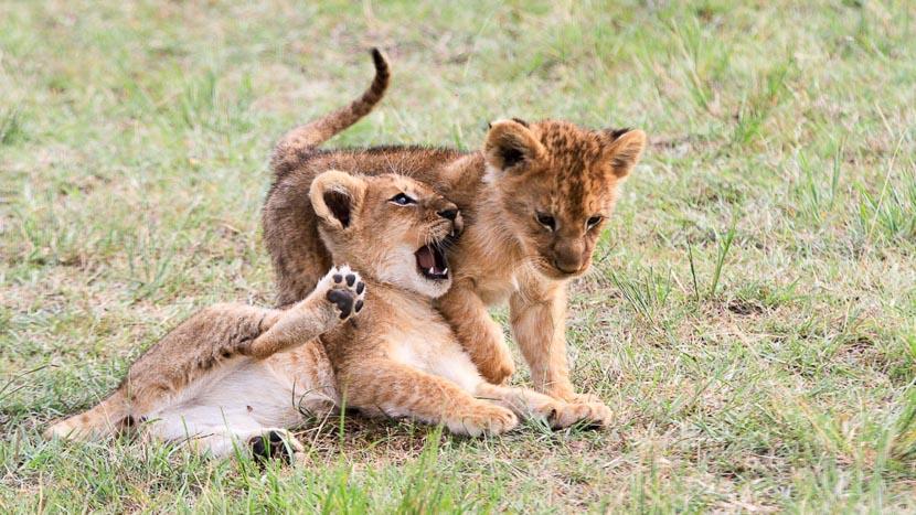 Sekenani Camp, Safari au Kenya © Sonia Rousseau