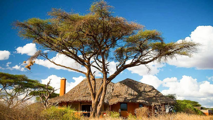 Amboseli Tawi Lodge, Tawi Lodge, Kenya