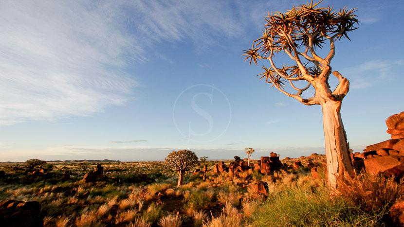 Intu Afrika Camelthorn Lodge, Safari en Namibie