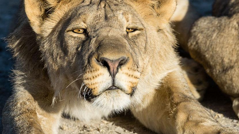 Campement itinérant en Namibie, Safaris à Ongava Game Reserve, Namibie © Olwen Evans