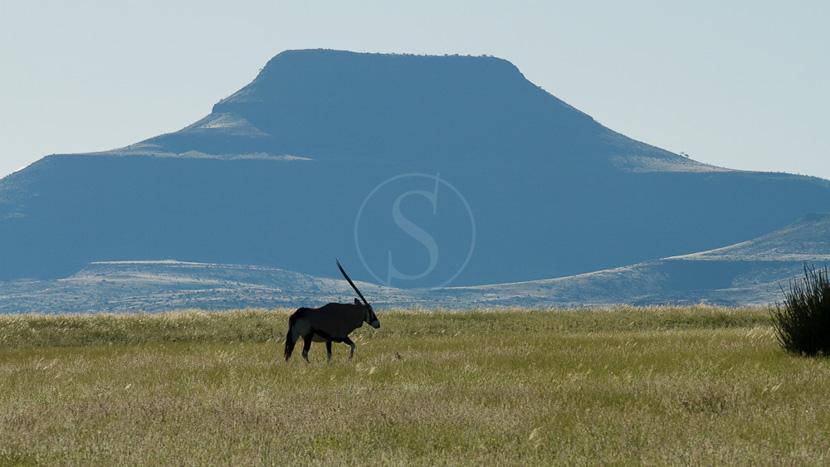 Campement itinérant en Namibie, Safari dans la concession de Palmwag, Namibie