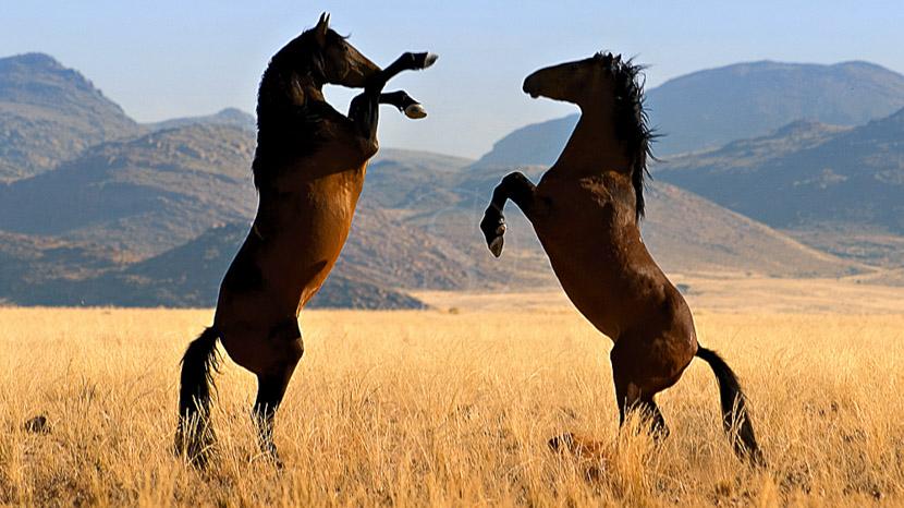Klein Aus Vista Desert Horse Inn, Klein aus vista, Namibie © Gondwana Collection