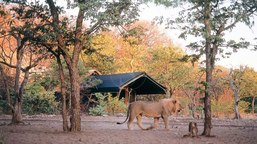 Ongava Tented Camp, Ongava Lodge à Etosha, Namibie © Olwen Evans