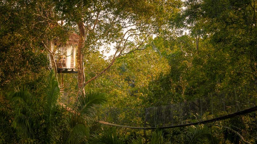 Treehouse Lodge , Treehouse Lodge, Pérou © Symoni Johnson