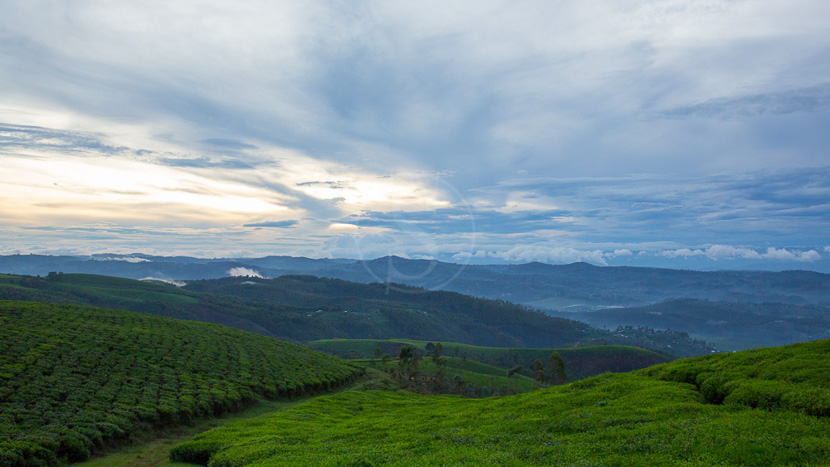 Nyungwe Top View Hill Hotel, Forêt de Nyungwe, Rwanda © L. Guillot