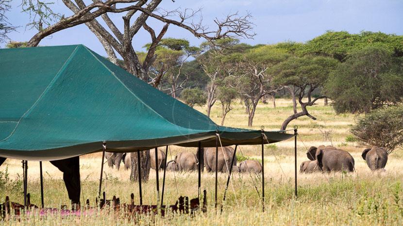 Osunyai Larmakau Camp, Osunyai Lamarkau Tarangire, Tanzanie