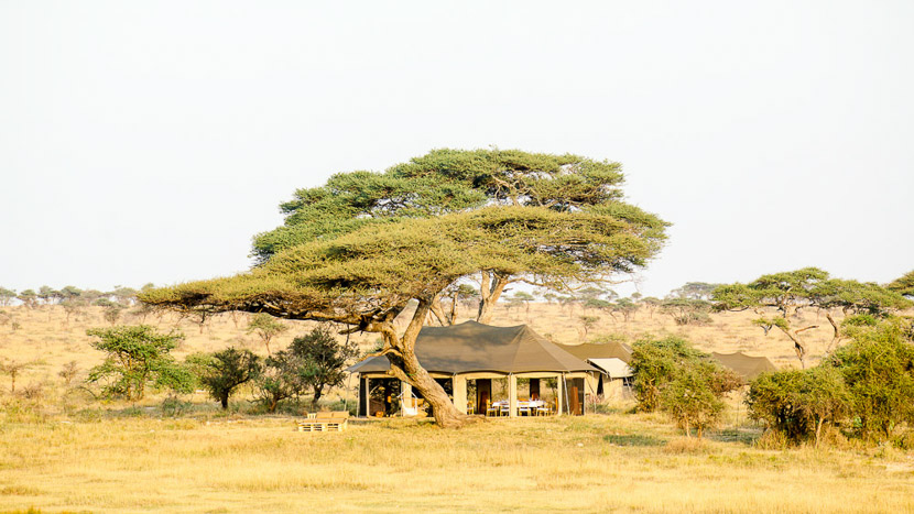 Namiri Plains, Namiri Plains Camp, Tanzanie © Asilia - Tanveer Badal