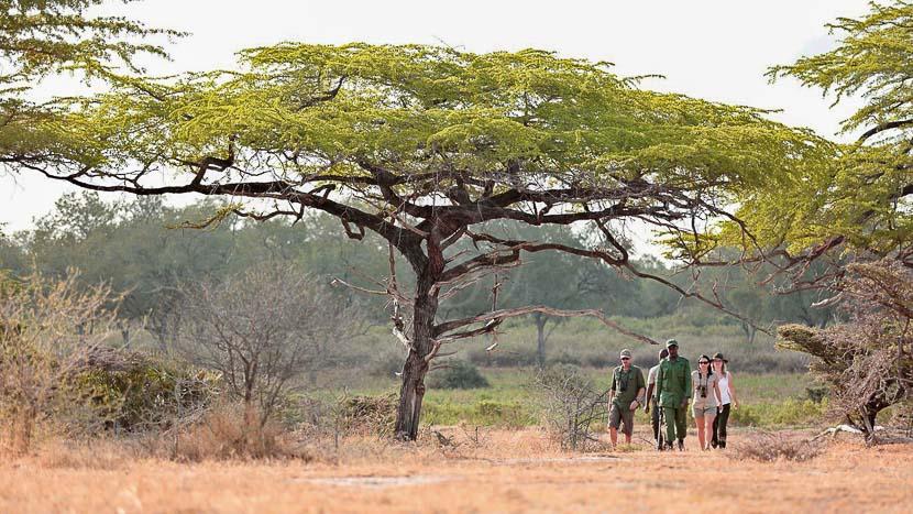 Roho Ya Selous, Roho ya Selous, Tanzanie © Asilia
