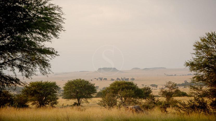 Sayari Camp, Sayari Camp, Tanzanie © Asilia - Eliza Deacon