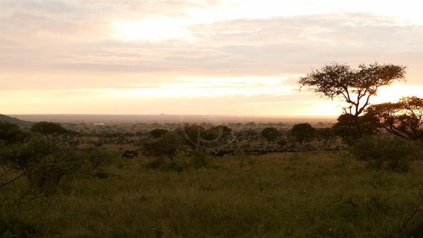Dunia Camp, Safari à Dunia Camp, Tanzanie © Asilia