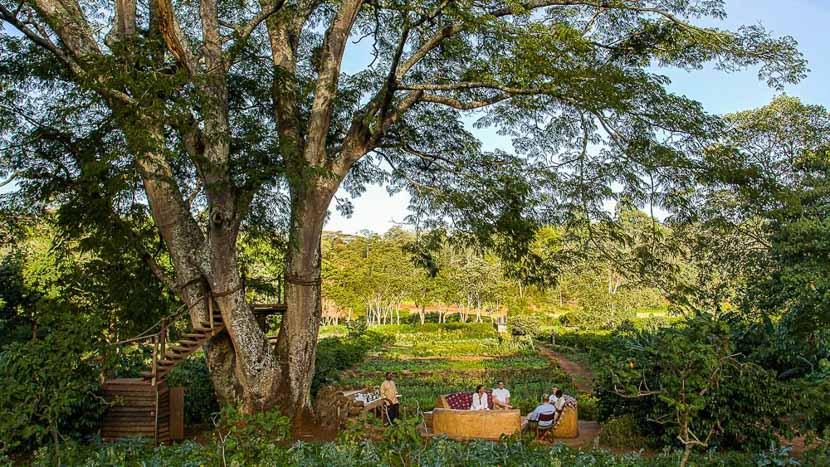 Gibb's Farm, Gibbs Farm, Tanzanie