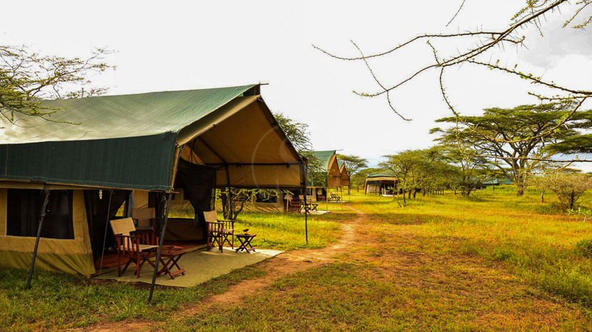 Ndutu Tingitana Camp, Ndutu Tingitana Camp, Tanzanie