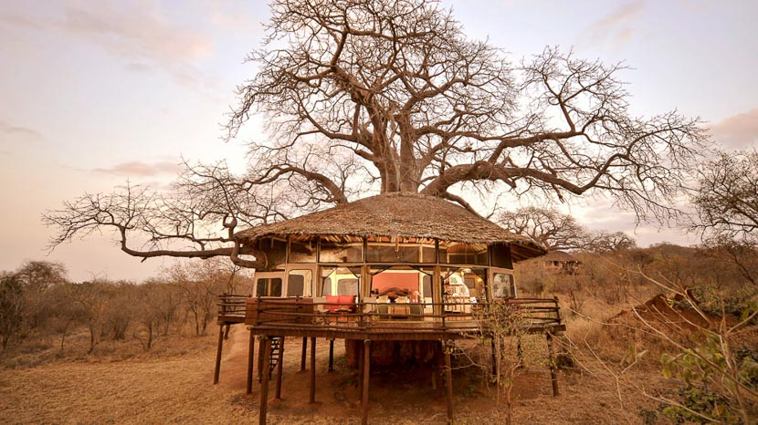 Tarangire Treetops, Tarangire Treetops, Tanzanie