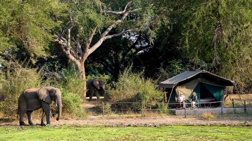 Flatdogs Camp, Flatdogs Camp - Safari Tent, Zambie