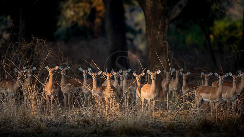 Luambe Camp, Luambe Camp, Zambie © Edward Selfe