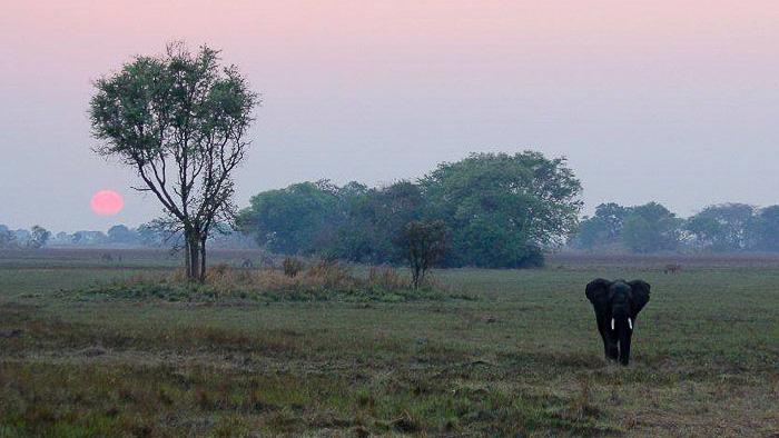 Mukambi Safari Lodge, Safari en Zambie