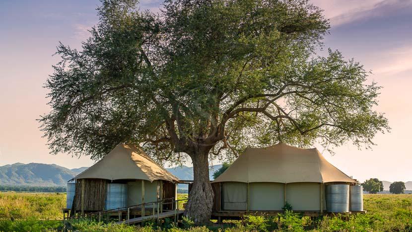 Nyamatusi Mahogany, Nyamatusi Mahogany, Zimbabwe © African Bush Camps