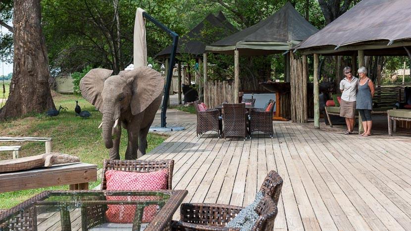 Ruckomechi Camp, Ruckomechi Camp, Zimbabwe © Olwen Evans