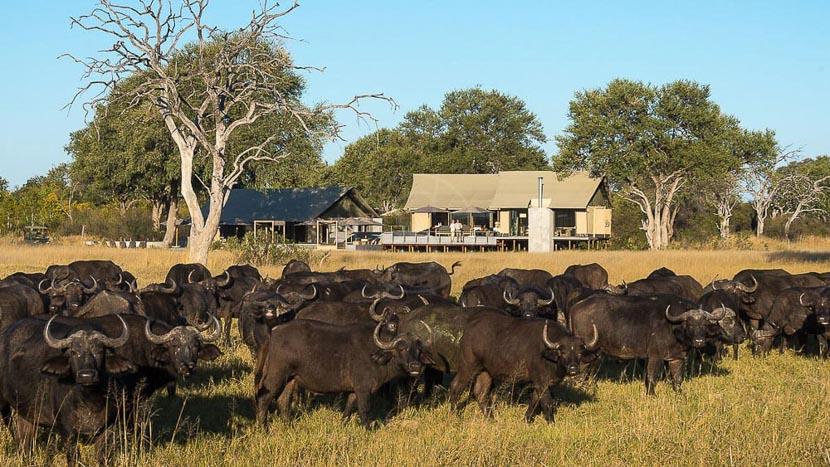 Linkwasha Camp, Linkwasha Camp, Zimbabwe © Wilderness Safaris