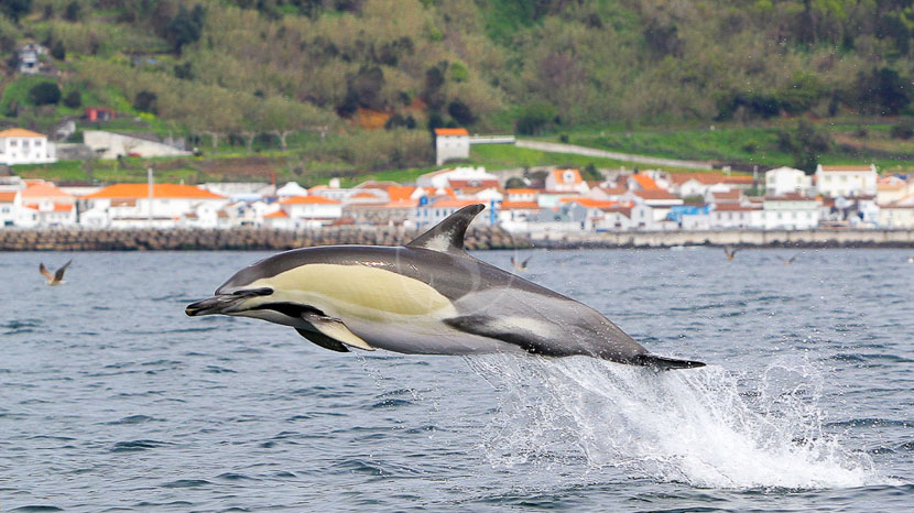 Açores, Ambiance des Açores