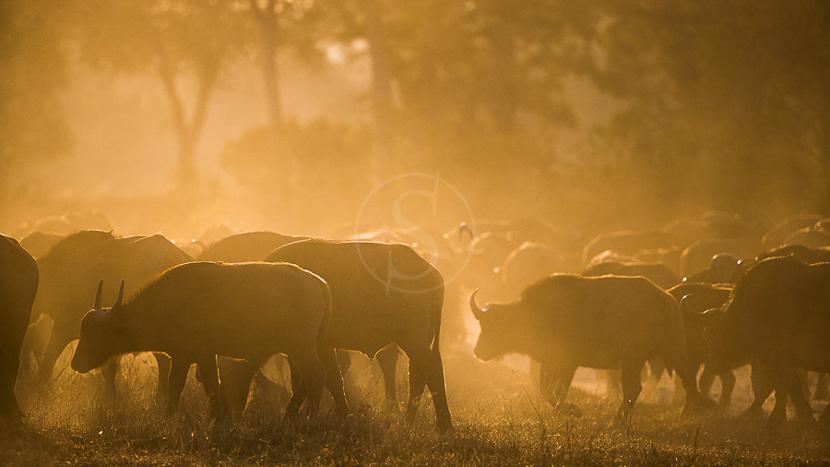 Réserve d'Hluhluwe-Umfolozi, Safari à Mala Mala, Afrique du Sud © C. Courteau