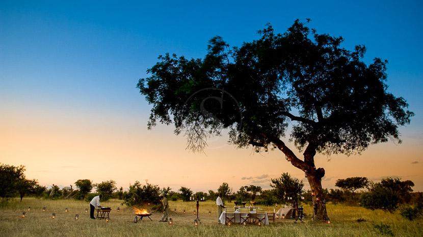 Réserve naturelle privée de Timbavati, Ngala Safari Lodge, Afrique du Sud © &Beyond