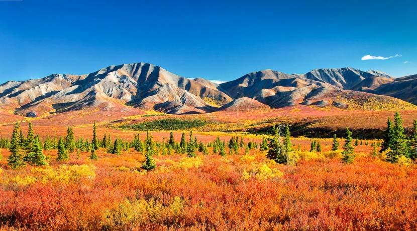 Parc national de Denali, Ambiance d'Alaska, Etats-Unis
