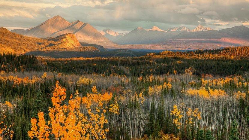 La vie sauvage du parc de Denali, Ambiance d'Alaska, Etats-Unis