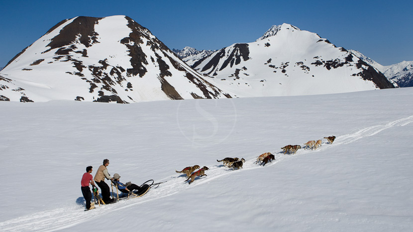 Parc national de Glacier Bay, Balade en traîneau à chiens, Alaska © Danny Lehman
