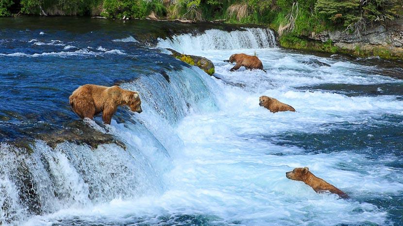 Parc national de Katmai, Ambiance d'Alaska, Etats-Unis