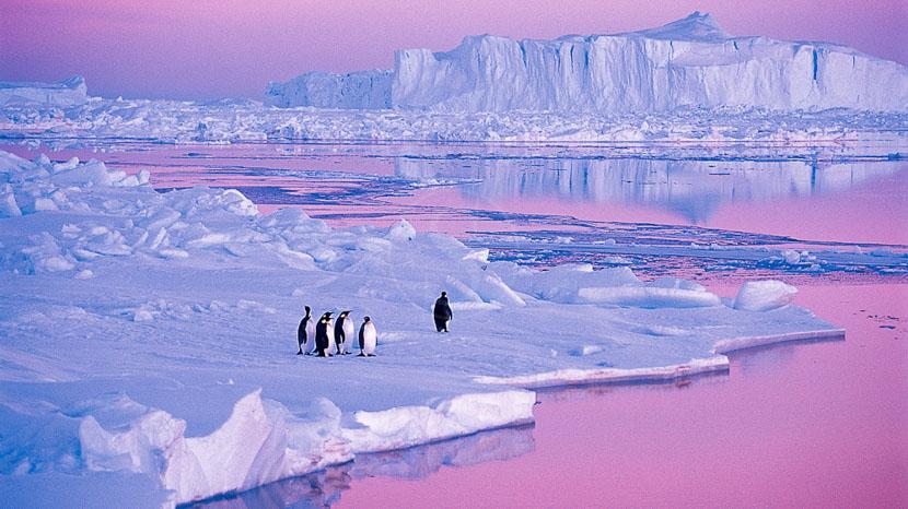 Antarctique, Manchots empereurs en mer de Weddell © Quark - Peter Guttman