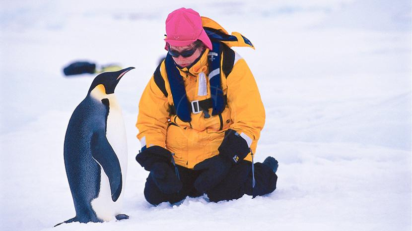 Antarctique, Manchot empereur en mer de Weddell © Quark - Peter Guttman
