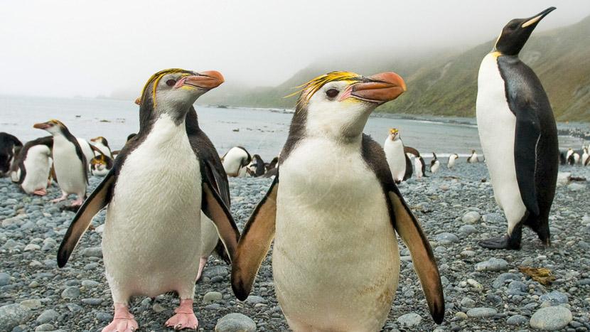 Mer de Ross, Mer de Ross, Antarctique © Oceanwide Delphine Aures