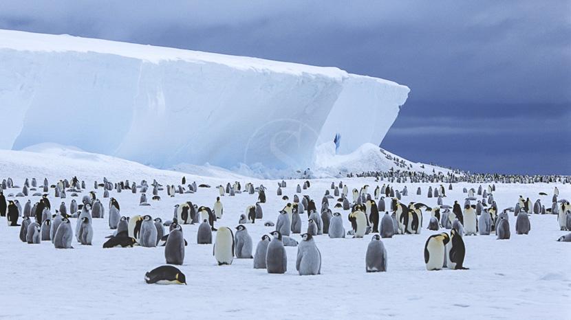 Mer de Weddell, Mer de Weddell, Antarctique © Shutterstock