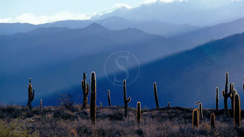 Salta et sa région, Ambiance d'Argentine © O. Dufeu