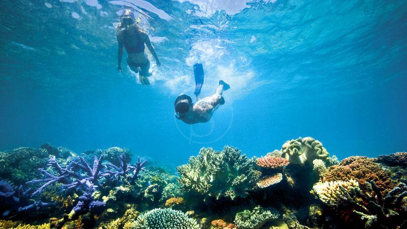 La Grande barrière de corail, Lizard Island, Australie