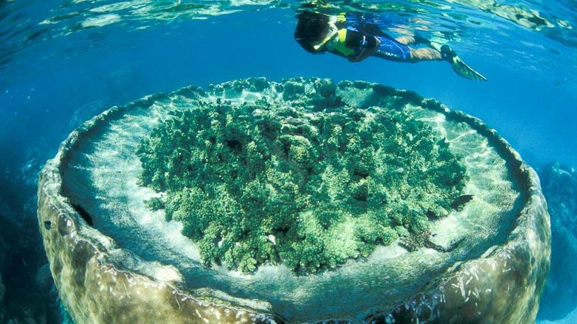 Croisière en catamaran sur Low Island, Sal Salis Ningaloo Reef, Australie © Sal Salis