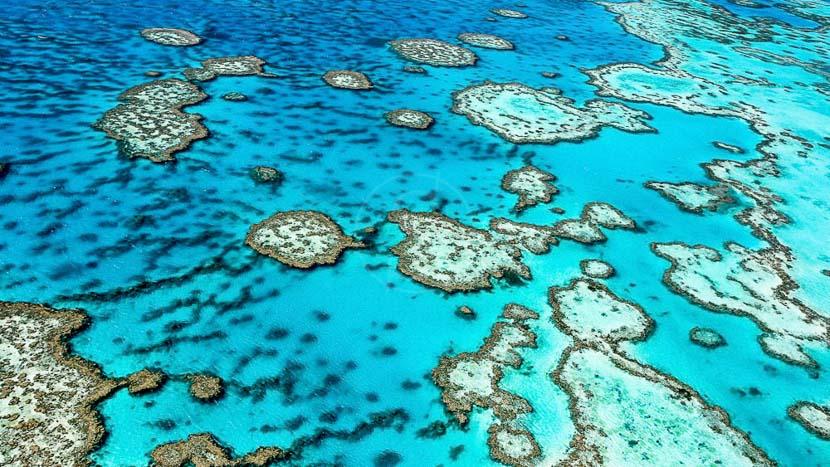 Croisière en catamaran sur Low Island, Barrière de corail, Australie