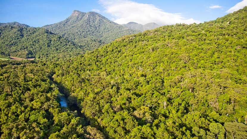 Daintree Forest, Silky Oaks Lodge, Australie