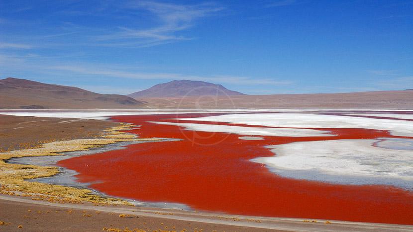 Bolivie, Laguna Colorada, Bolivie © Alain Pons