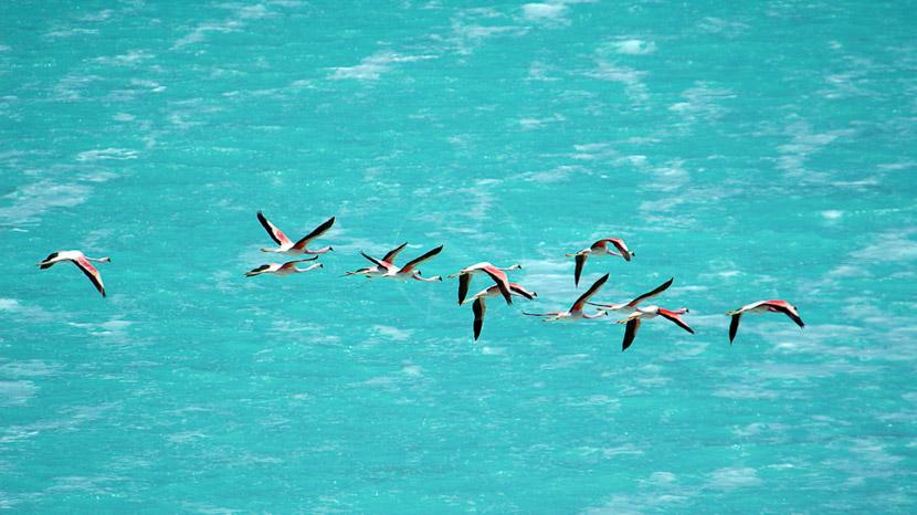 Bolivie, Laguna Verde, Bolivie © Alain Pons