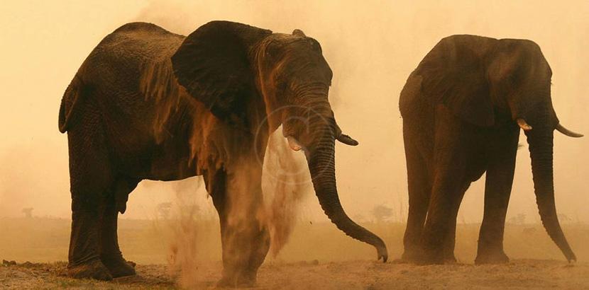 Botswana, Chobe Elephant Camp, Botswana