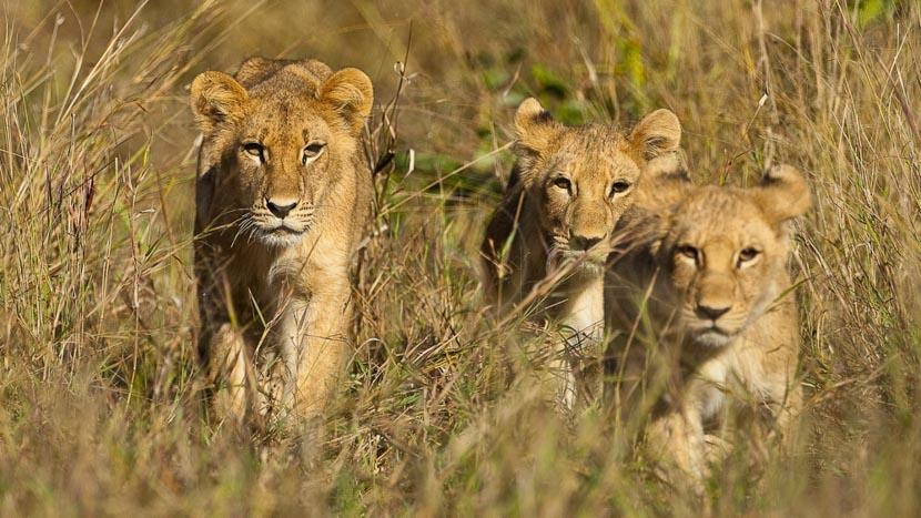 Botswana, Safari au Botswana © Laurent Guillot