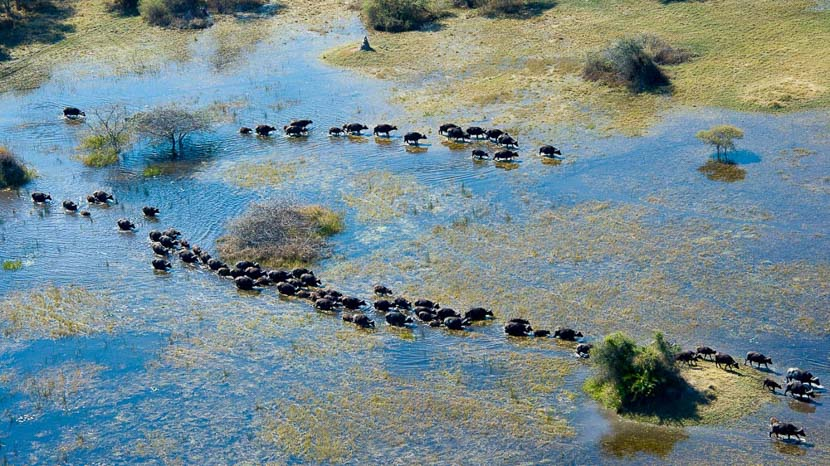 Botswana, Vumbura Plains Camp, Botswana © Wilderness Safaris