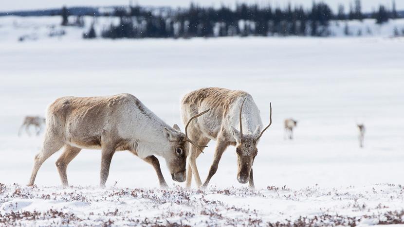 Nunavut, Lodge au Nunavut, Canada