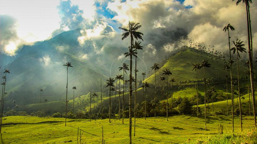 Vallée de Cocora, Vallée de Cocora, Colombie © Shutterstock