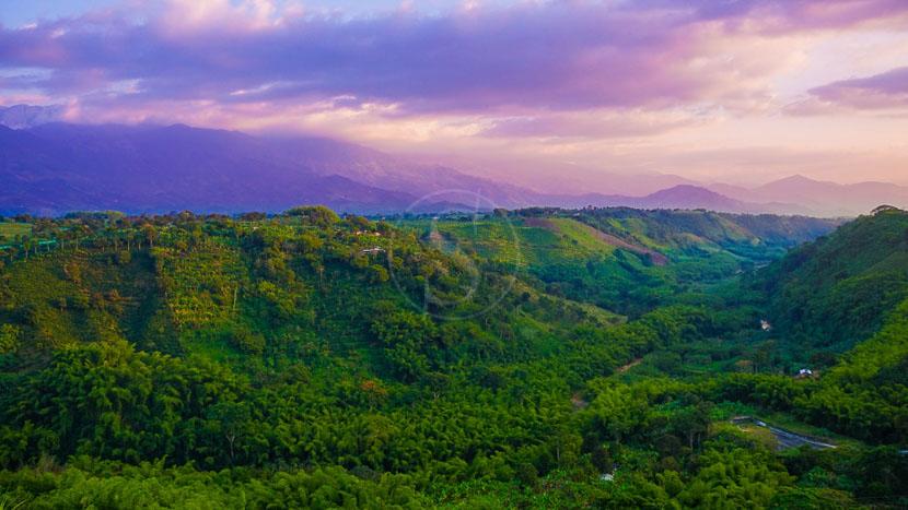 Vallée de Cocora, Vallée de Armenia, Colombie © Shutterstock