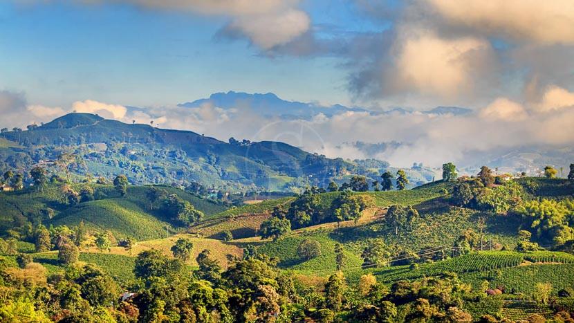 Vallée de Cocora, Manizales, Colombie © Shutterstock
