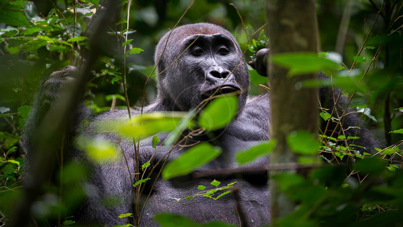 Parc national d'Odzala-Kokoua, Odzala Discovery Camps © Dana Allen