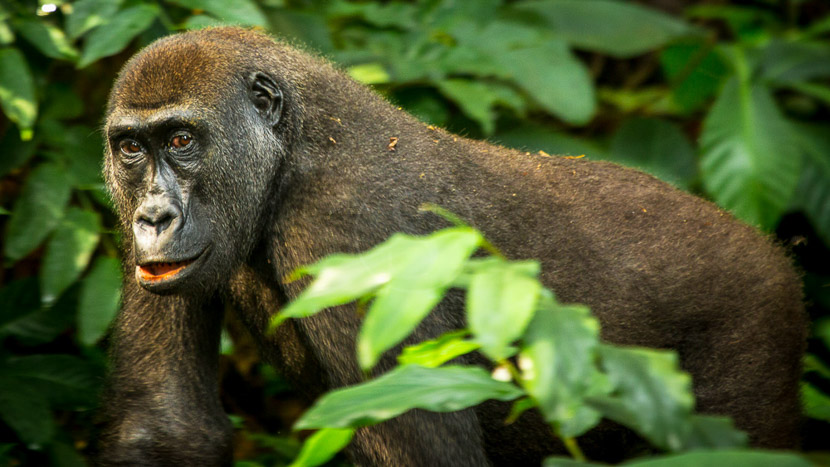 Parc national d'Odzala-Kokoua, Odzala Discovery Camps © Andrew Howard